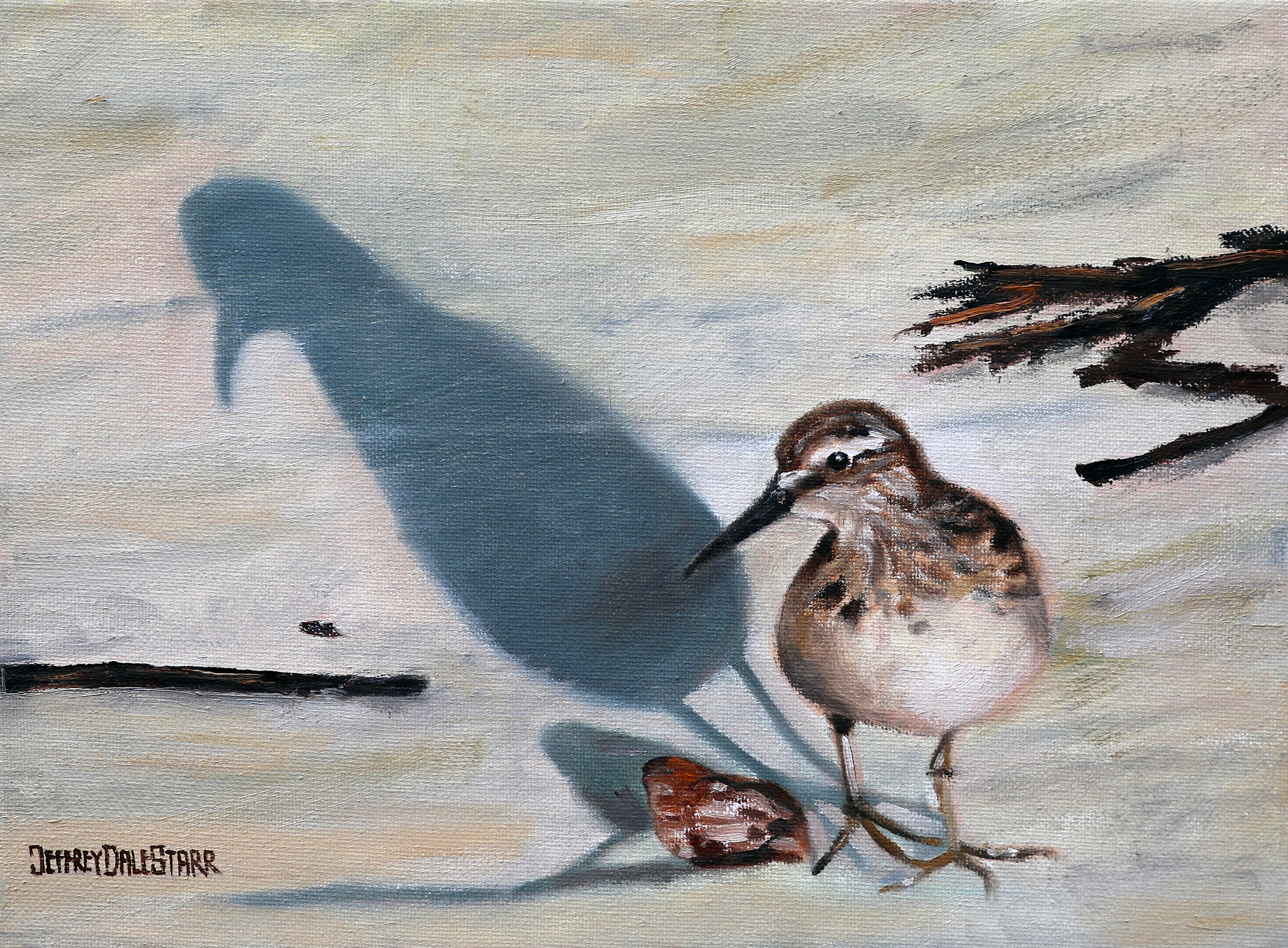 Sandpiper and Shell by Jeffrey Dale Starr