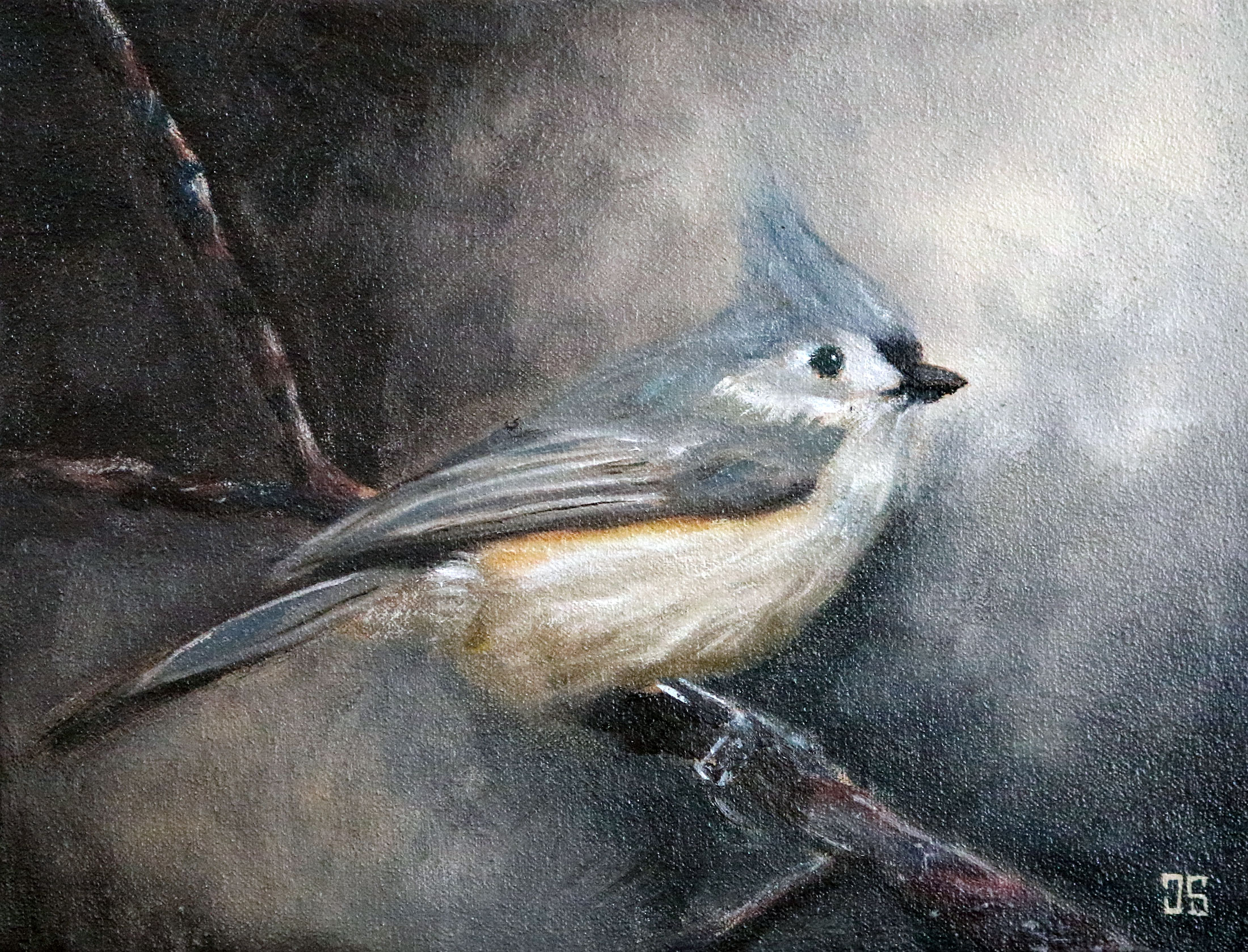 Birds of Cape Cod: Tufted Titmouse by Jeffrey Dale Starr