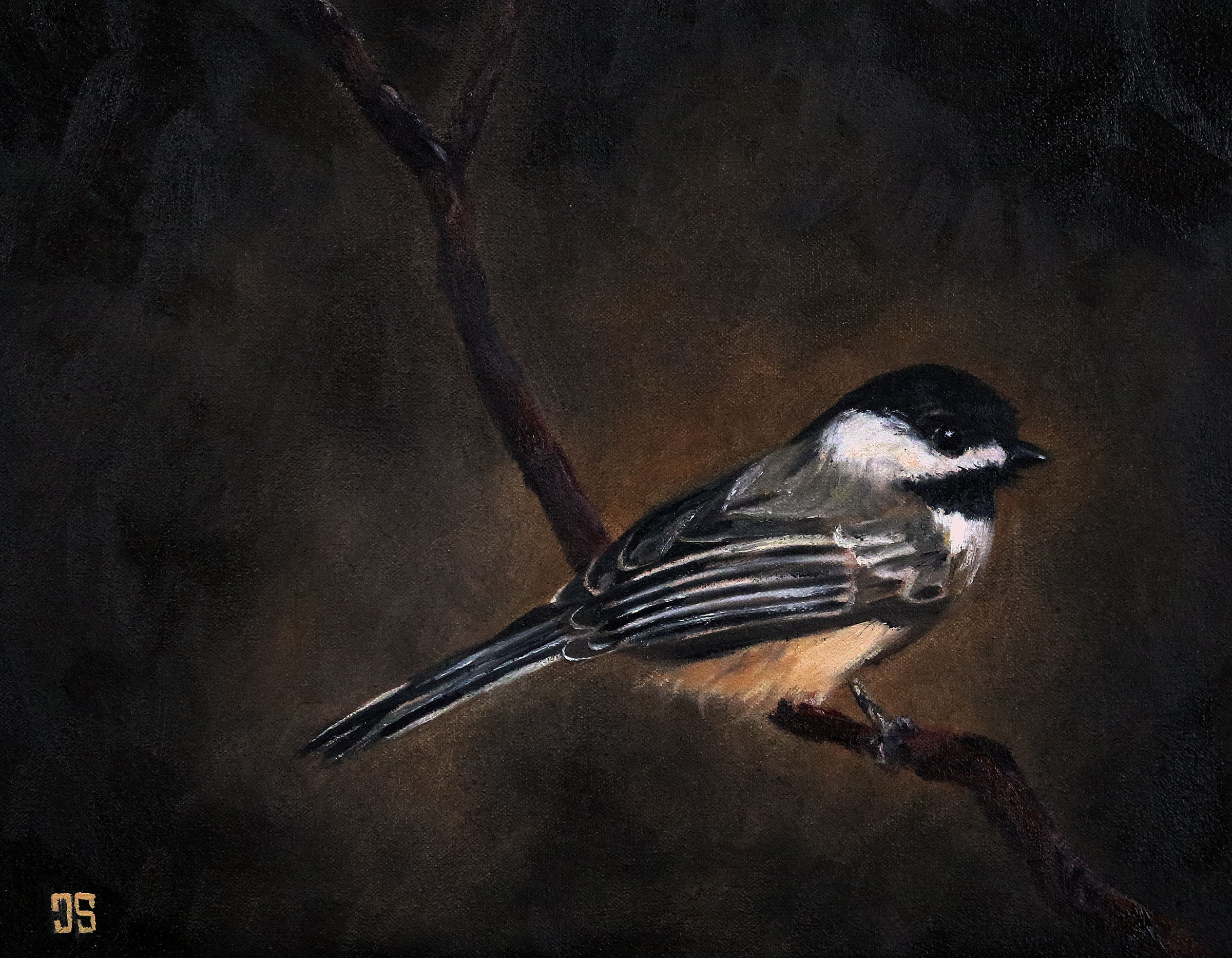 Birds of Cape Cod: Black-Capped Chickadee by Jeffrey Dale Starr