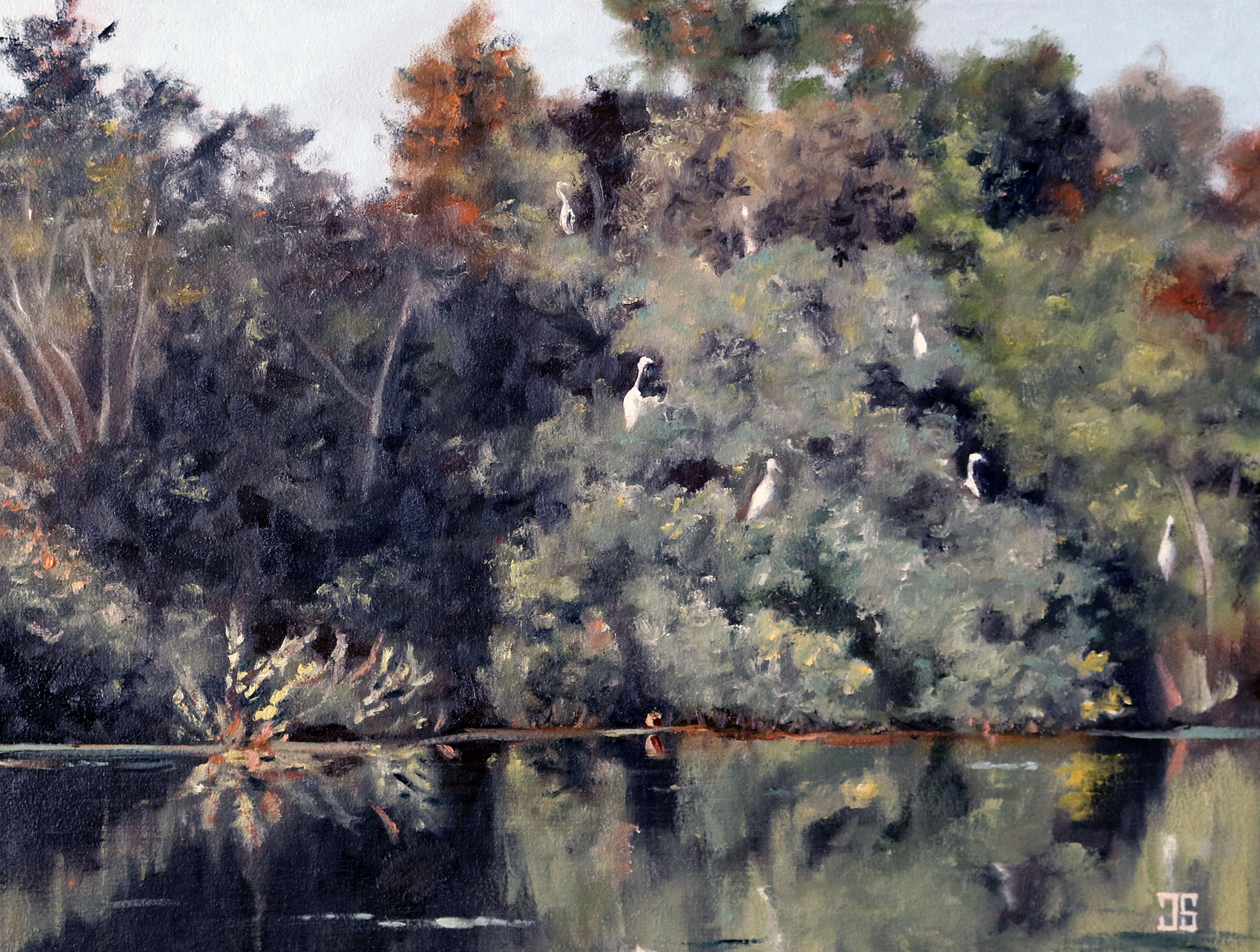 Great Egrets in the Trees, Hopper Pond, West Barnstable by Jeffrey Dale Starr