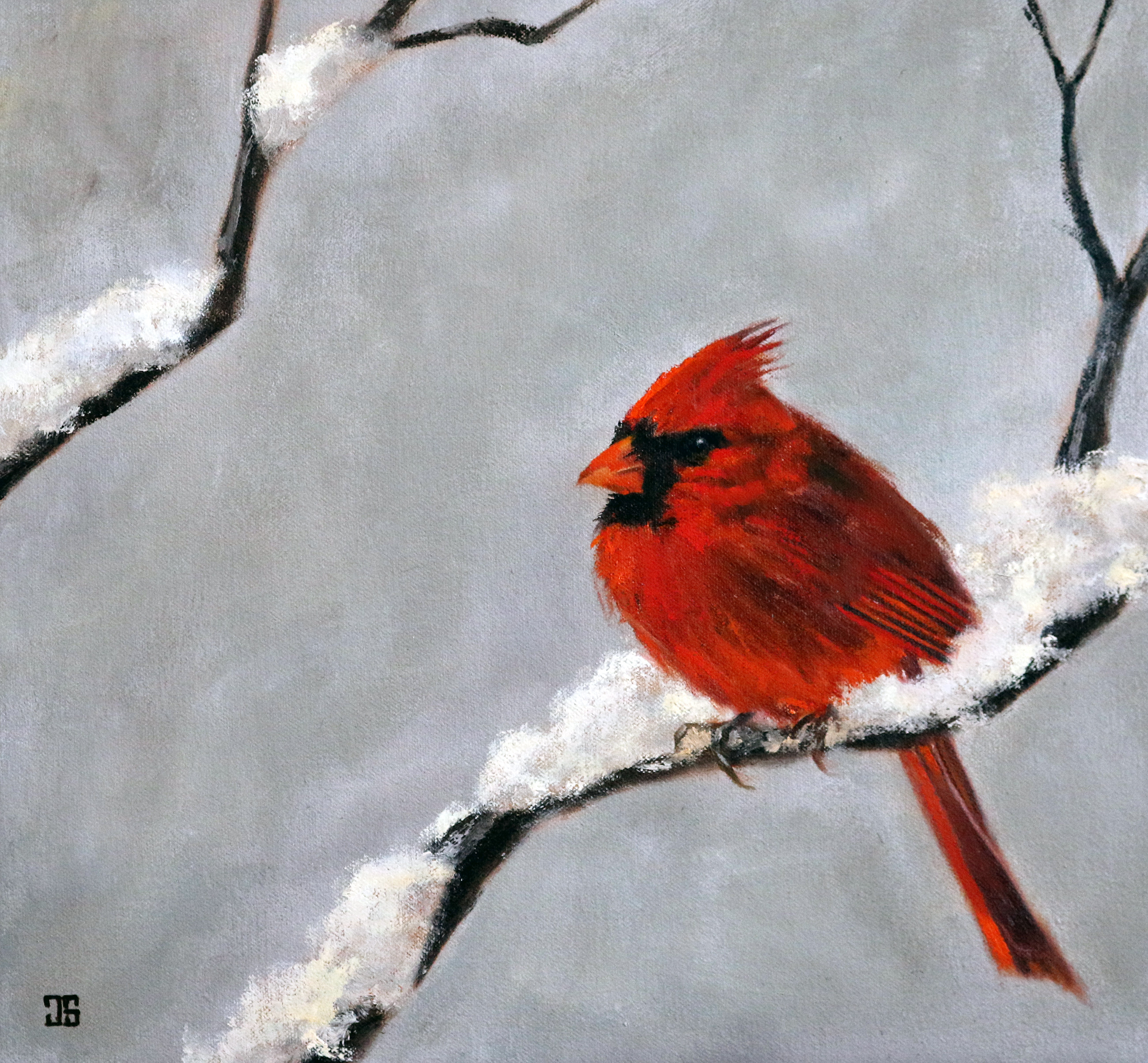 Cardinal in Snow by Jeffrey Dale Starr