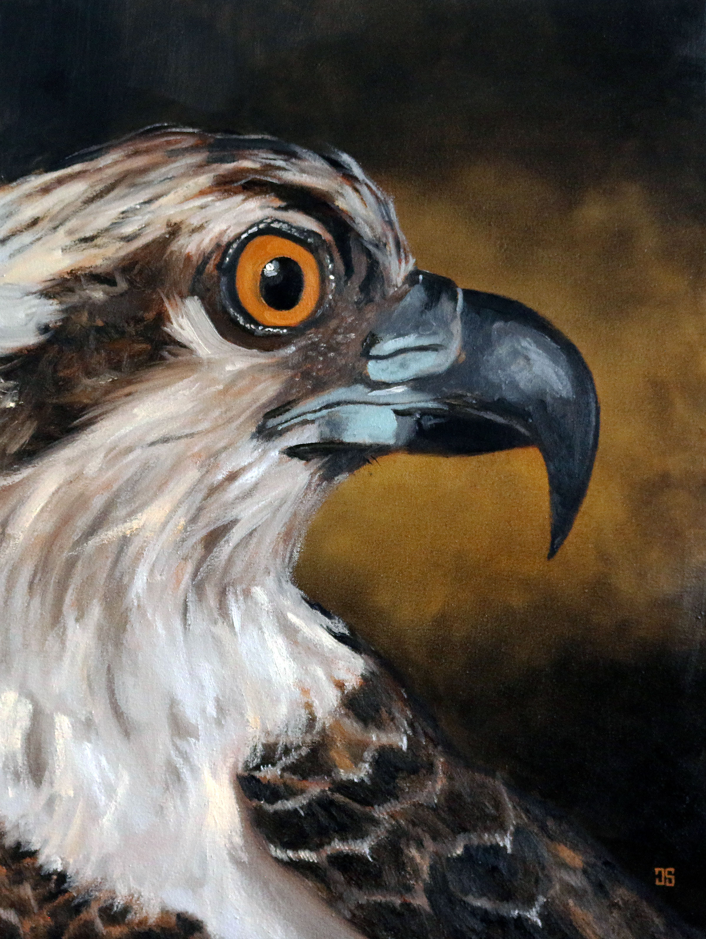 "Oil painting ""Birds of Cape Cod: Osprey"" by Jeffrey Dale Starr"