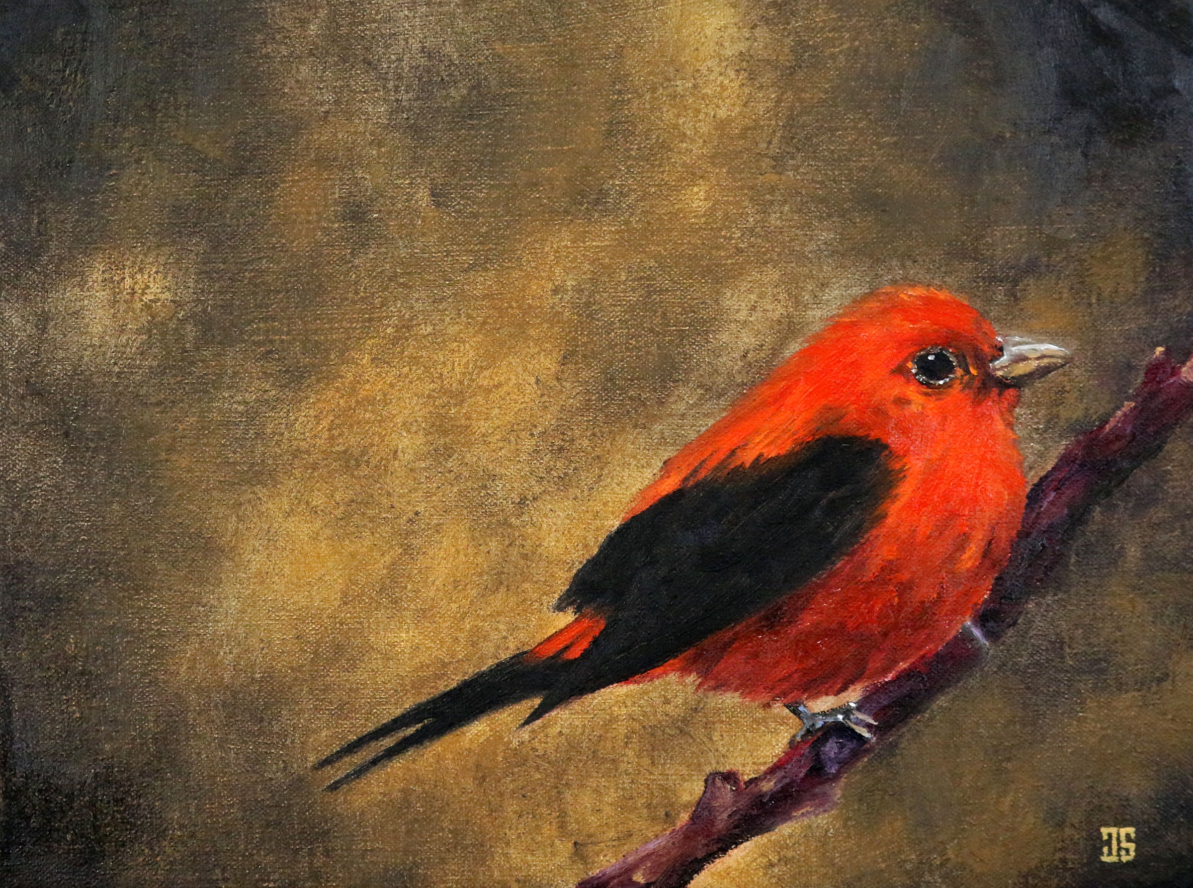 Birds of Cape Cod: Scarlet Tanager (for Geoffrey Mawby) by Jeffrey Dale Starr